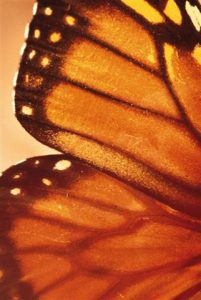 Butterfly-Transform