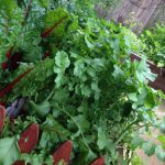 Garden Salad Wraps